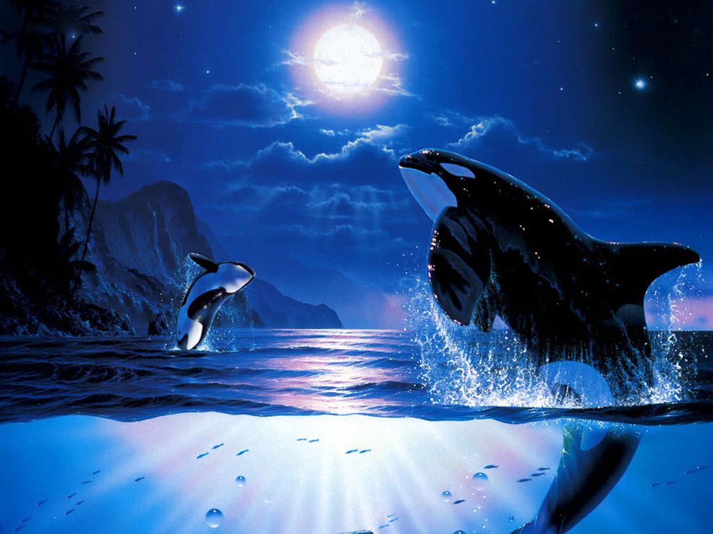 killer whales wallpapers   Funny Animals 1024x768