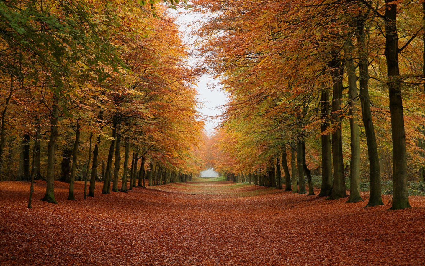 Funny Pictures Gallery Fall forest background fall 1440x900