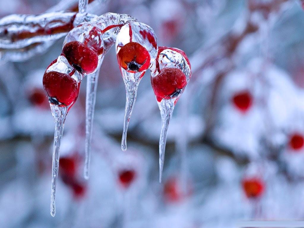 Frozen Christmas Mac 1024x768