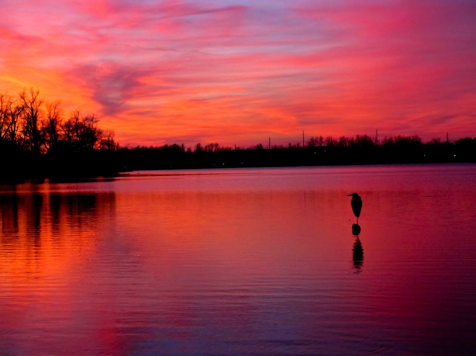 Pink Sunset wallpaper   ForWallpapercom 1600x1198