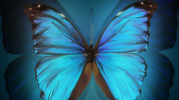 Animated Butterfly Wallpaper Moving