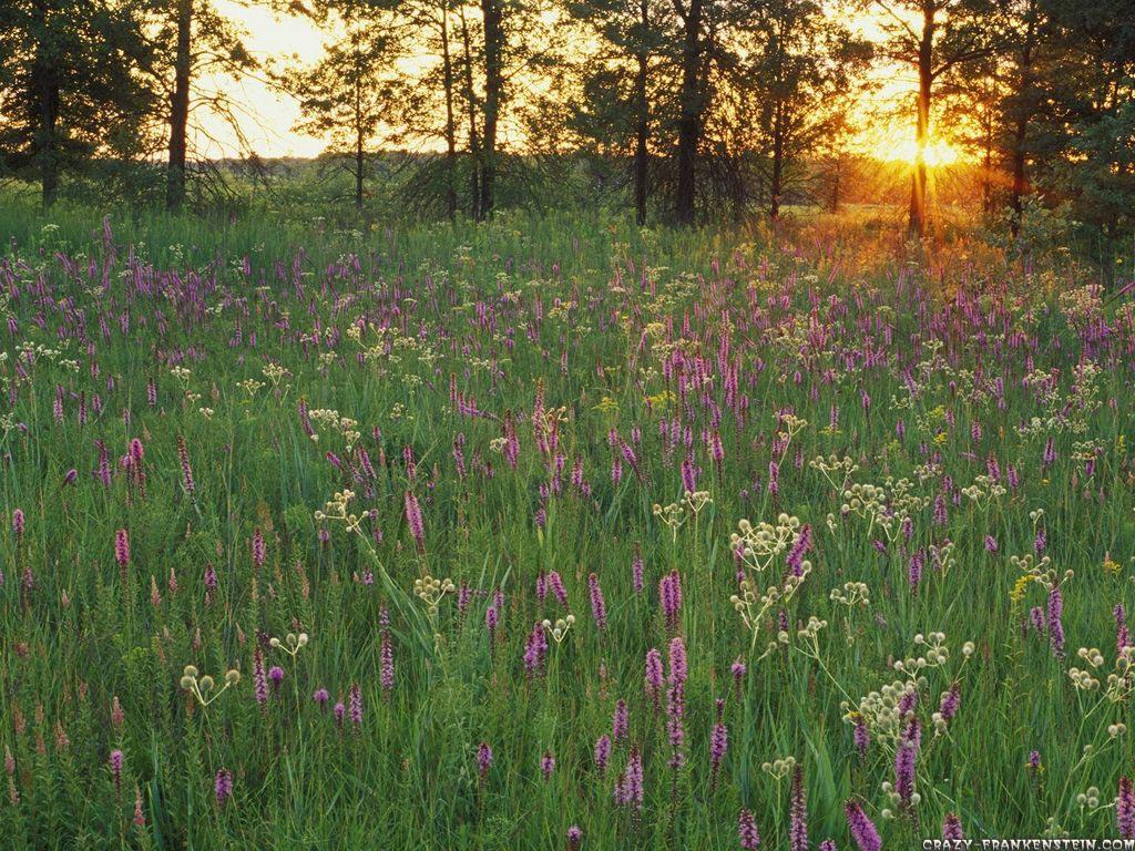 Dementia Sherpa   prairie flowers at sunset iroquois conservation 1024x768
