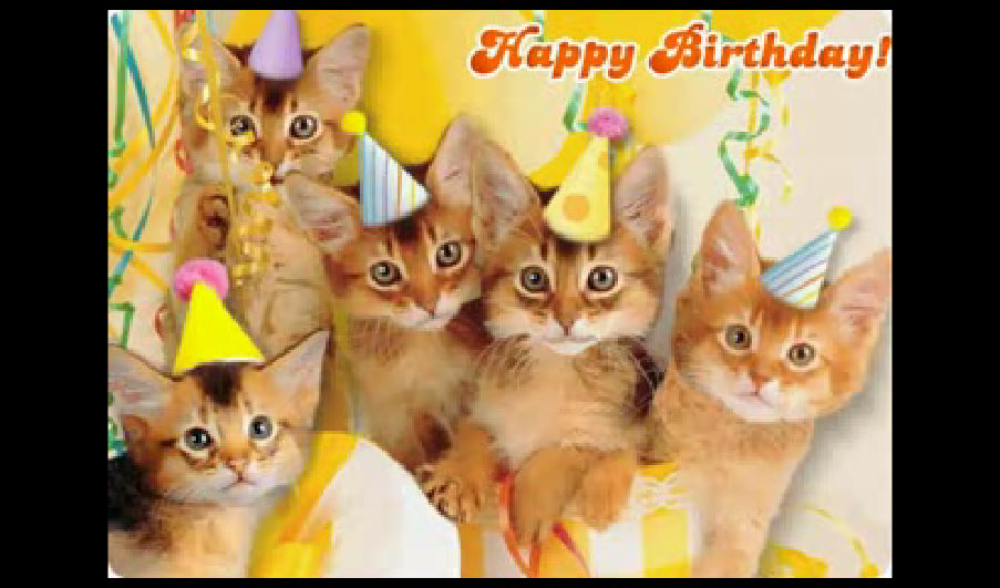 Funny Birthday Cat 7 Desktop Wallpaper 903x531