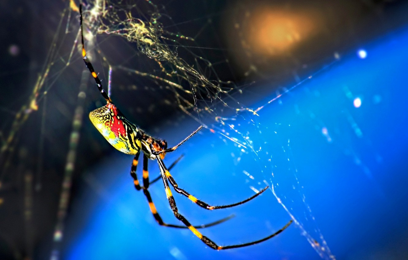 Wallpaper macro nature web spider insect images for desktop 1332x850