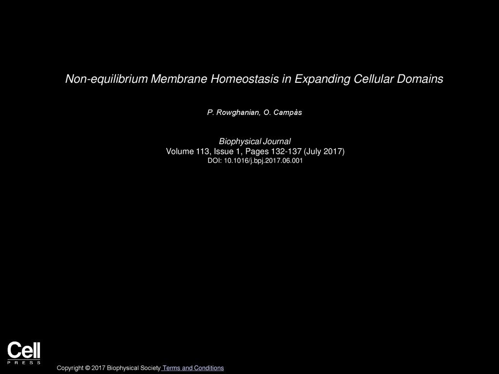 Non equilibrium Membrane Homeostasis in Expanding Cellular Domains 1024x768