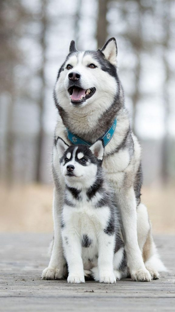 54 So Cute Animal Wallpapers You Cant Help Like 2020   Page 2 of 576x1024