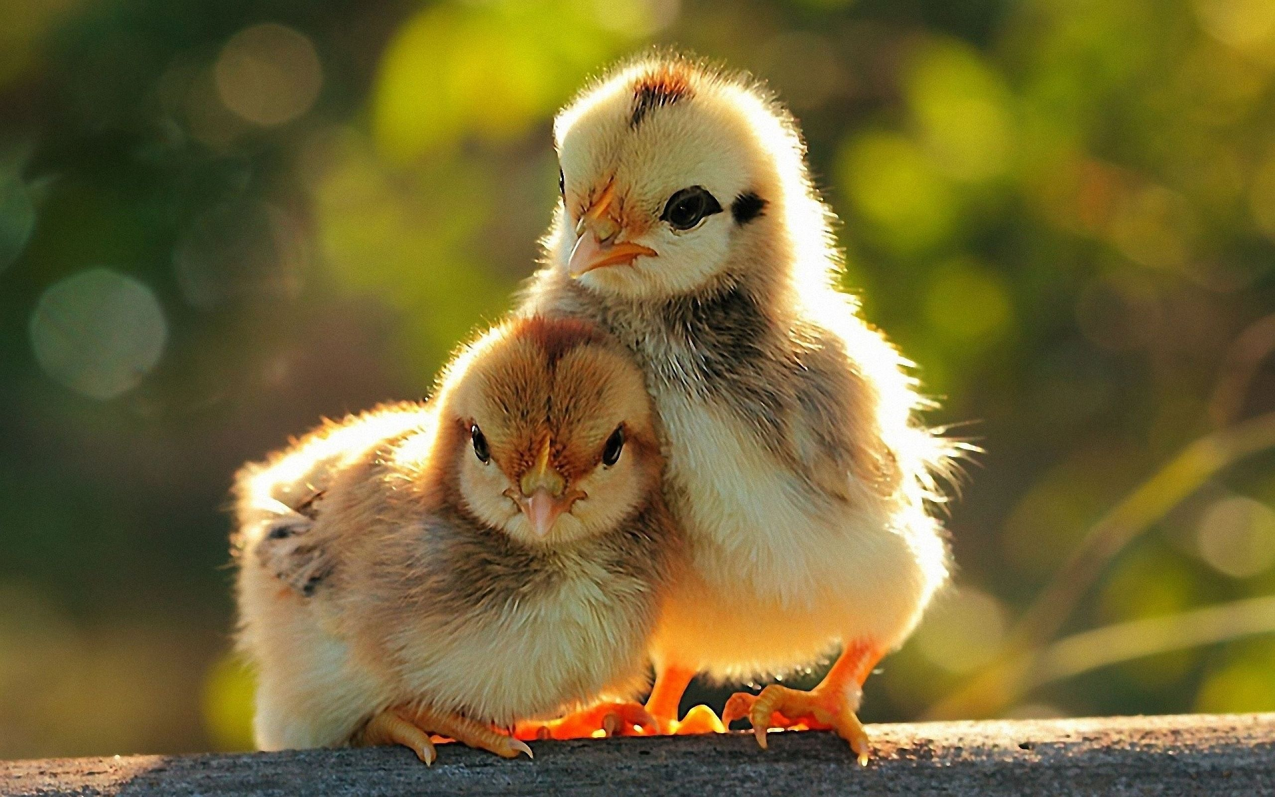 Cute Animals Animals Animals beautiful Pet birds 2560x1600