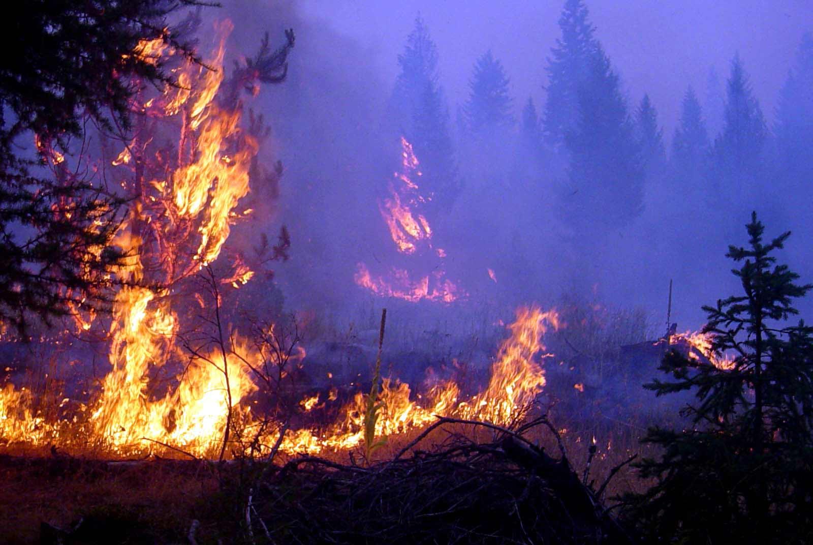 As wildfires worsen calls for change in tactics us news wildland wildland fire wallpaper wallpapersafari voltagebd Gallery