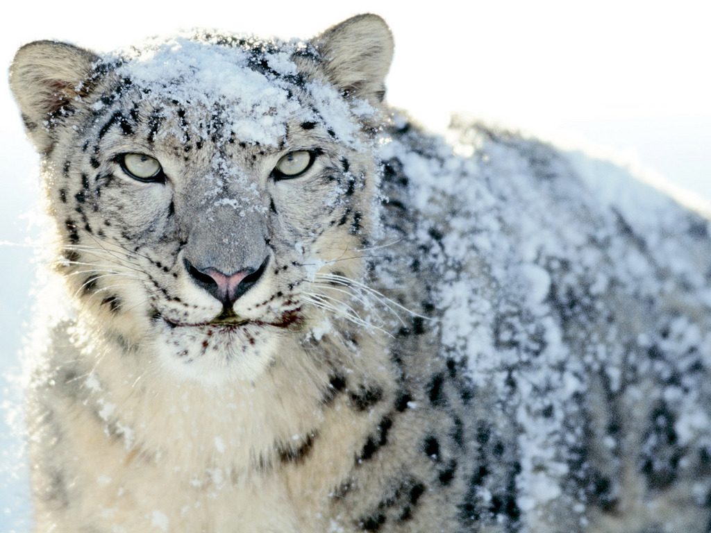 mac os x snow leopard wallpapers pack