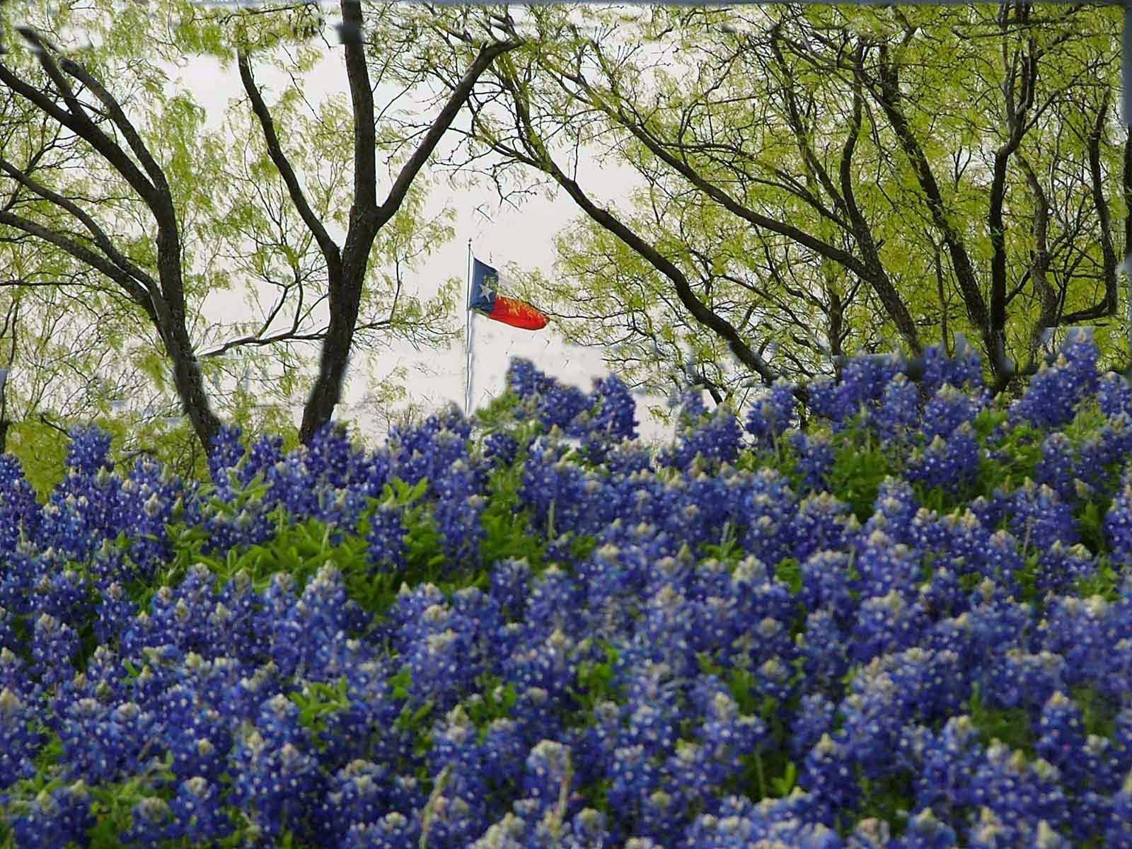 Texas Flag in Mesquites Bluebonnets Rustic Images Foundmyself 1600x1200