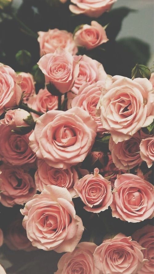 Free Download Pinterest Pink Roses Wallpapers And Vintage Wallpapers
