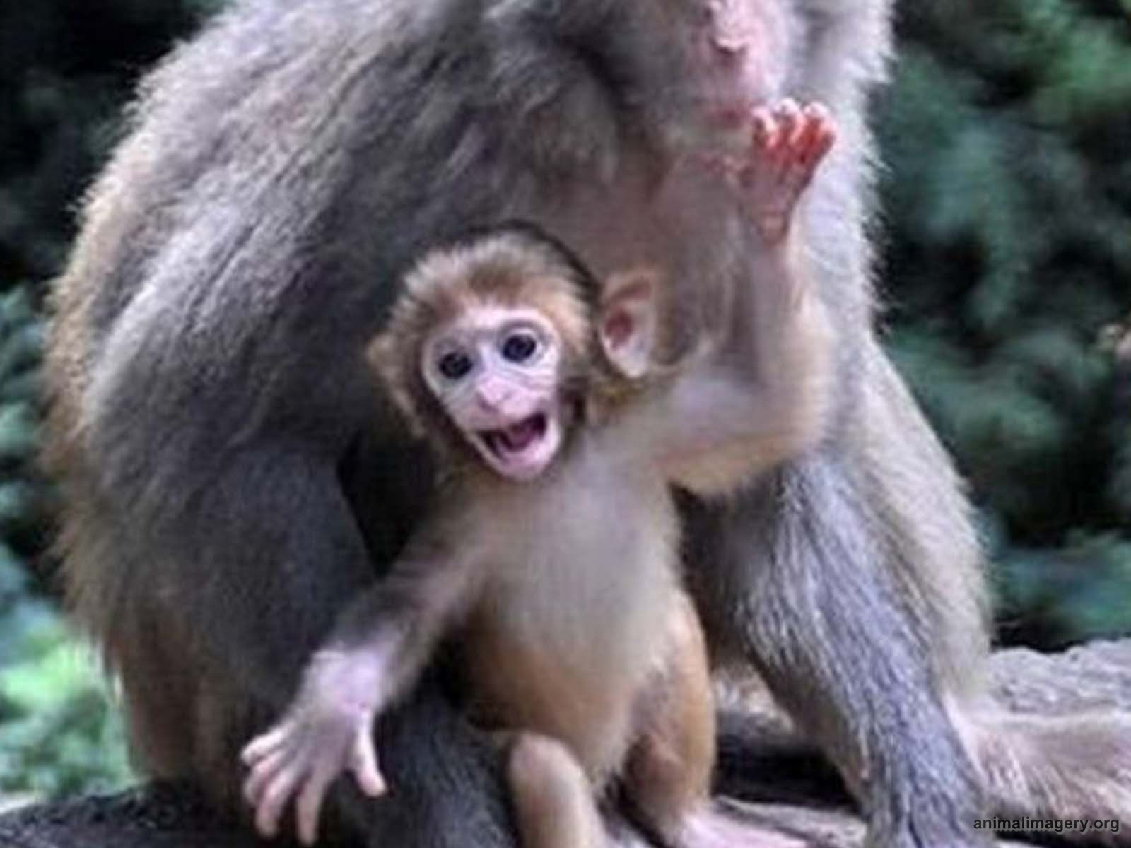 Cute Baby Monkeys Images Crazy Gallery 1600x1200