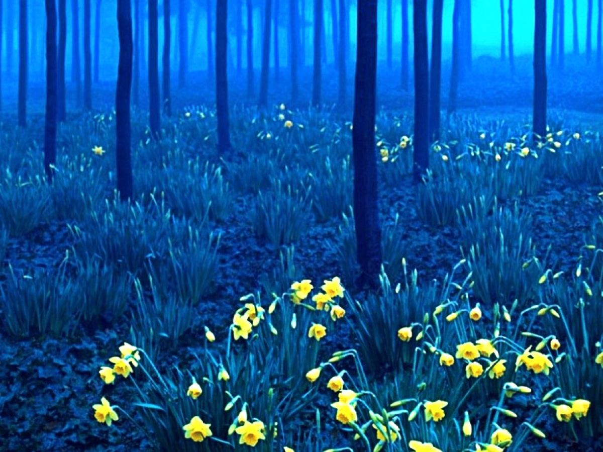 The black forest in germany HQ WALLPAPER   129624 1200x899