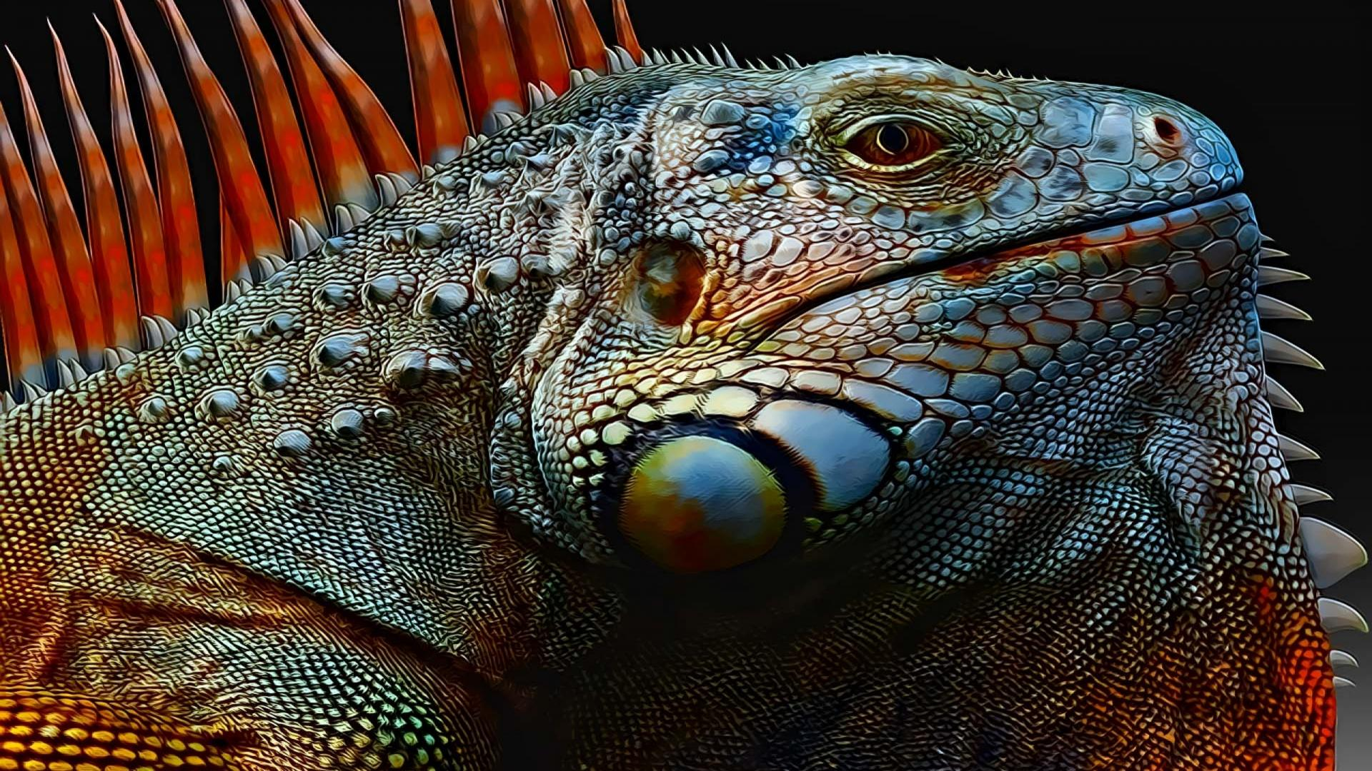 Iguana Wallpaper 1   2560 X 1600 stmednet 1920x1080
