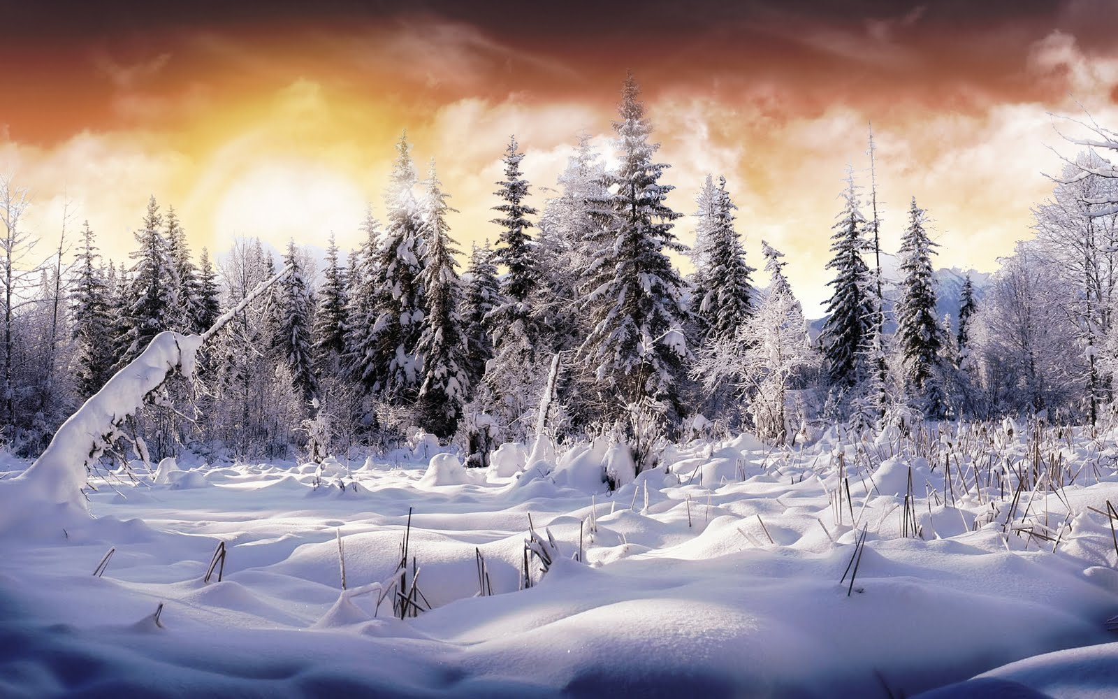43 Beautiful Winter Wallpapers   Wallpapers for dekstop 1600x1000