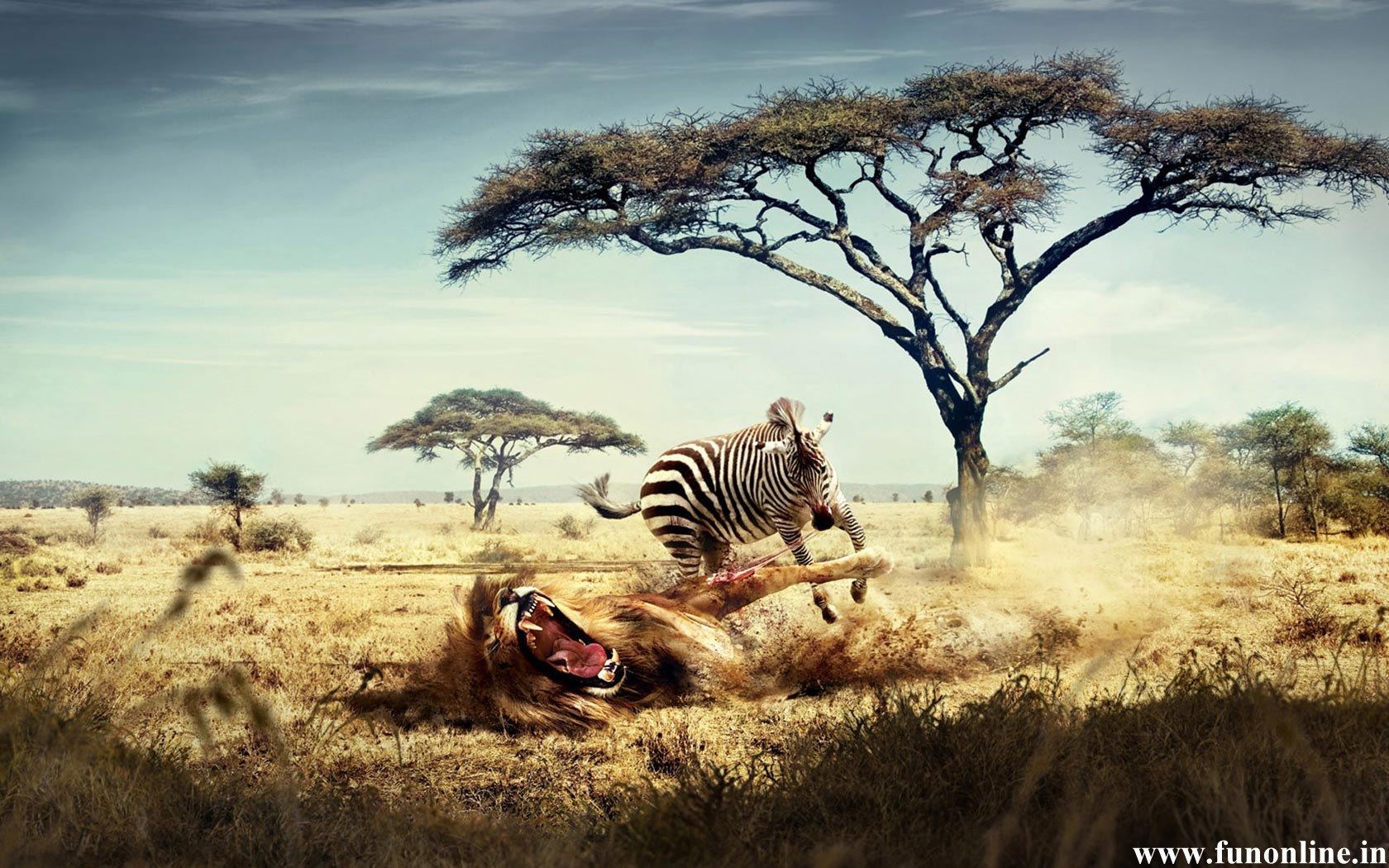Funny hunting wallpaper wallpapersafari zebra wallpapers download free black and white zebra hd wallpapers voltagebd Images