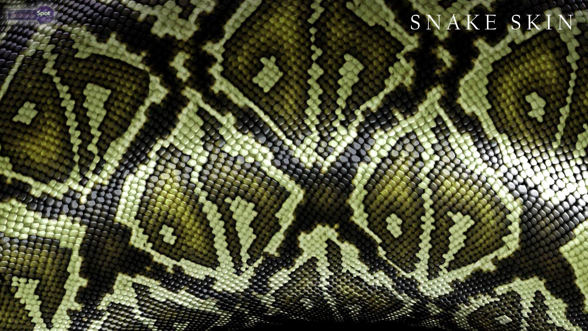 snake skin wallpaper snake skin wallpapers snake wallpaper snake 1920x1080