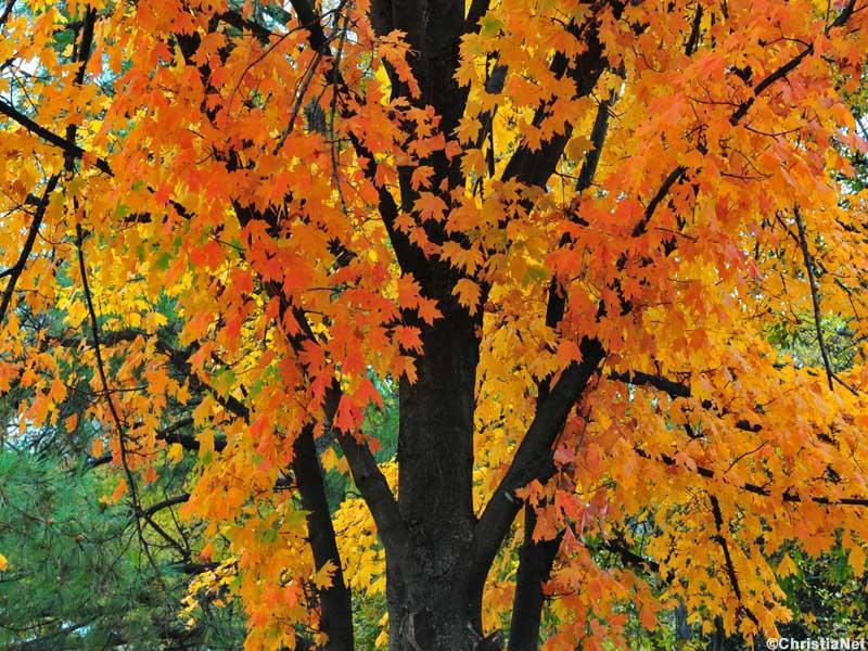 christian fall wallpaper - photo #38