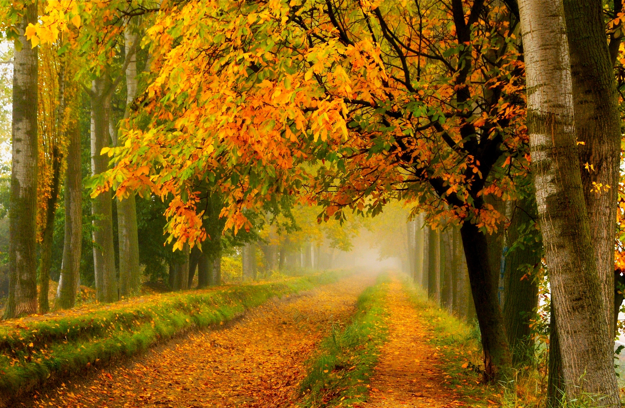 fall colors walk leaves autumn nature trees road forest park wallpaper ...