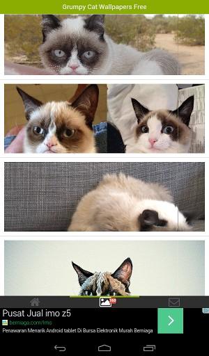 View bigger   Grumpy Cat Wallpapers for Android screenshot 300x512