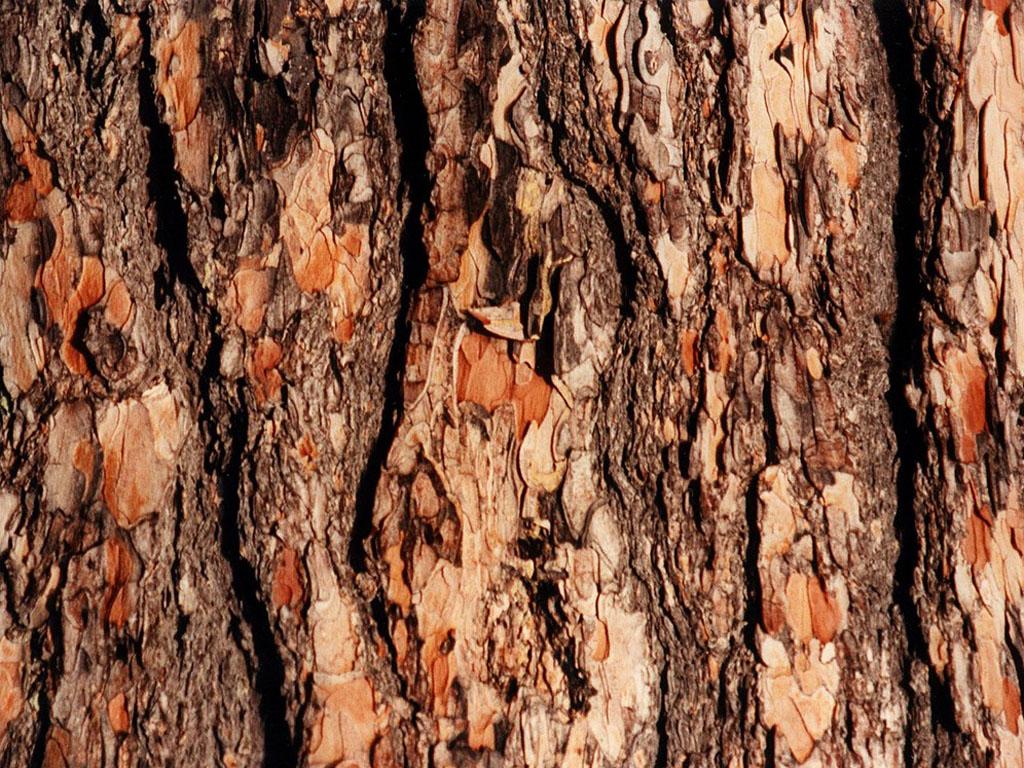 wallpapers Tree Bark Wallpapers 1024x768