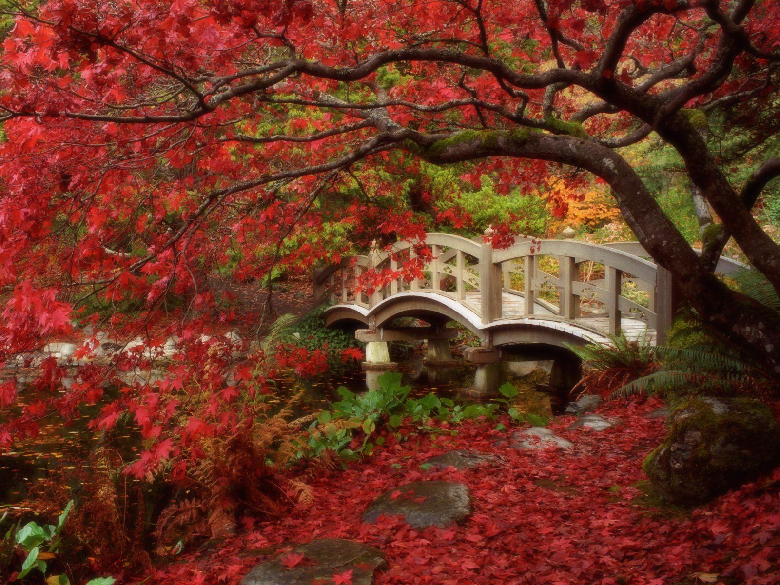 Japanese Garden British Columbia Wallpapers HD 1600x1200