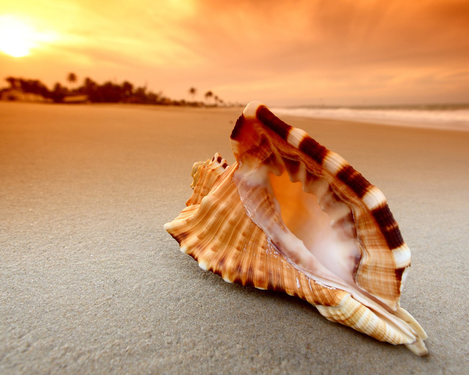 Shell Wallpaper HD 34309 1600x1280px 1600x1280