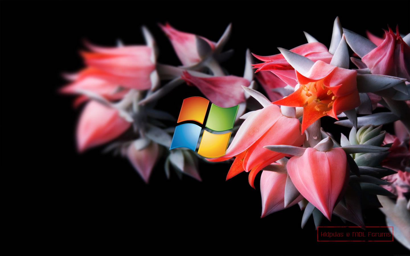 Download Desktop Wallpapers For Windows 8 Elegance Collections 1440x900
