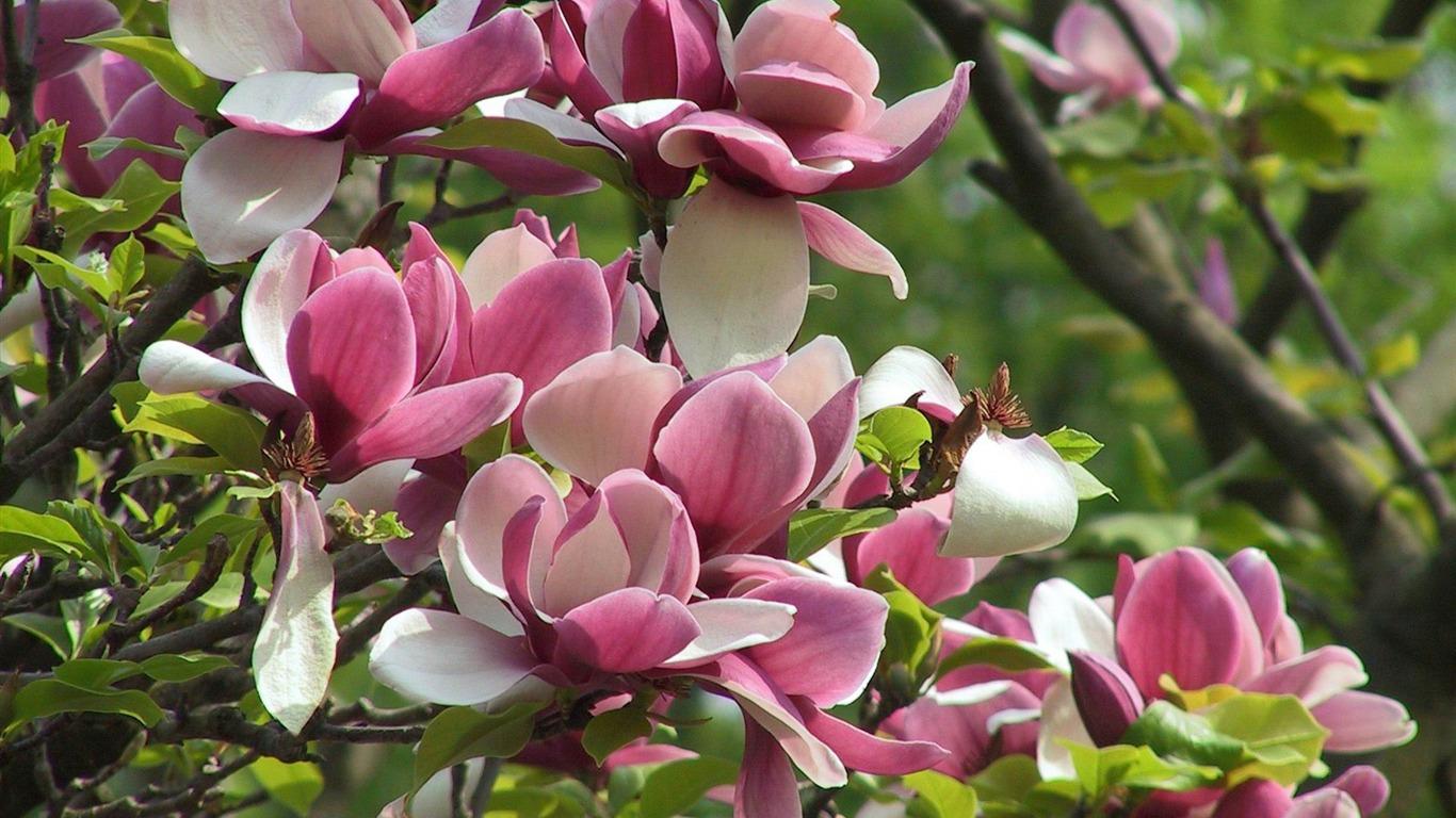 Free Spring Flower Desktop Wallpaper Flowers Healthy