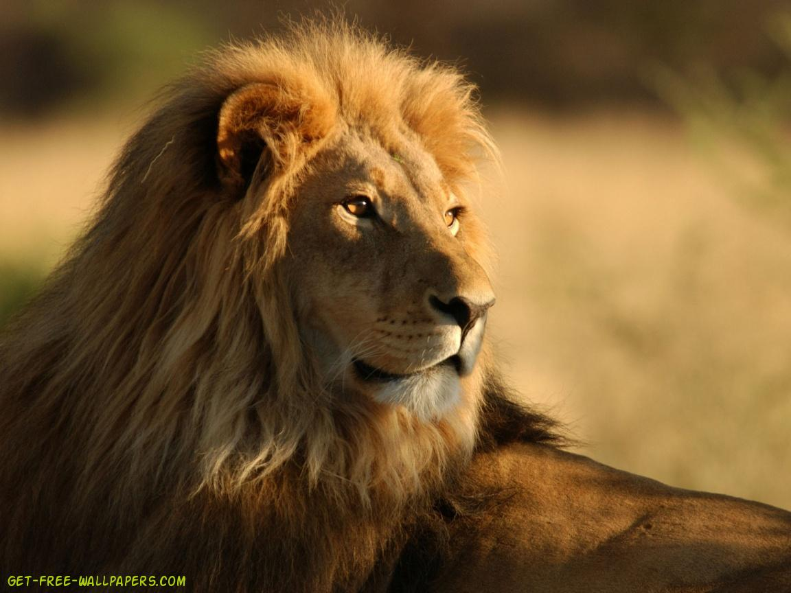 Download The Lion King Wallpaper 1152x864