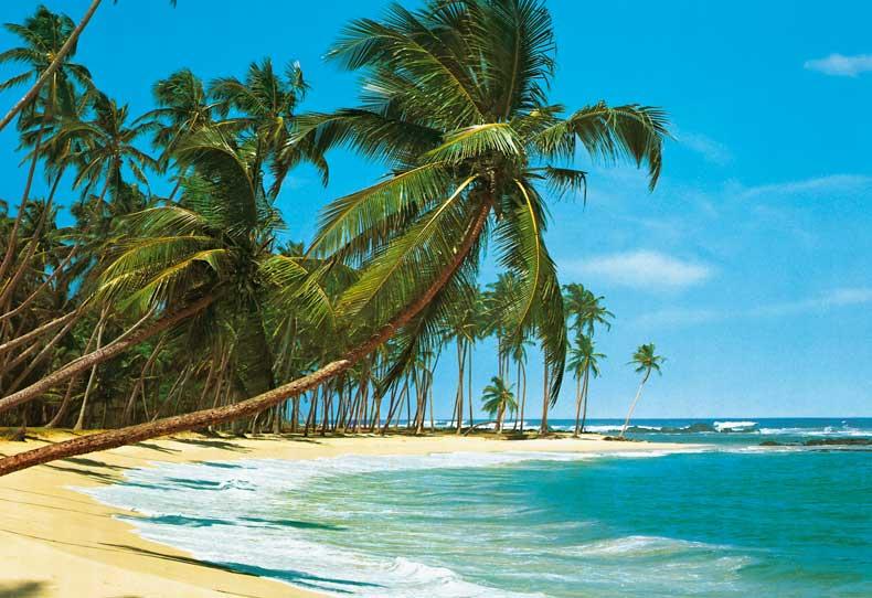 palm trees sunset images palm trees sunset images palm trees sunset 790x542