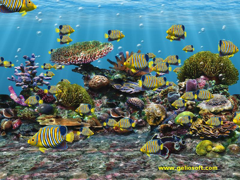 3D Screensaver and Wallpaper with Regal Angel Fish 800x600