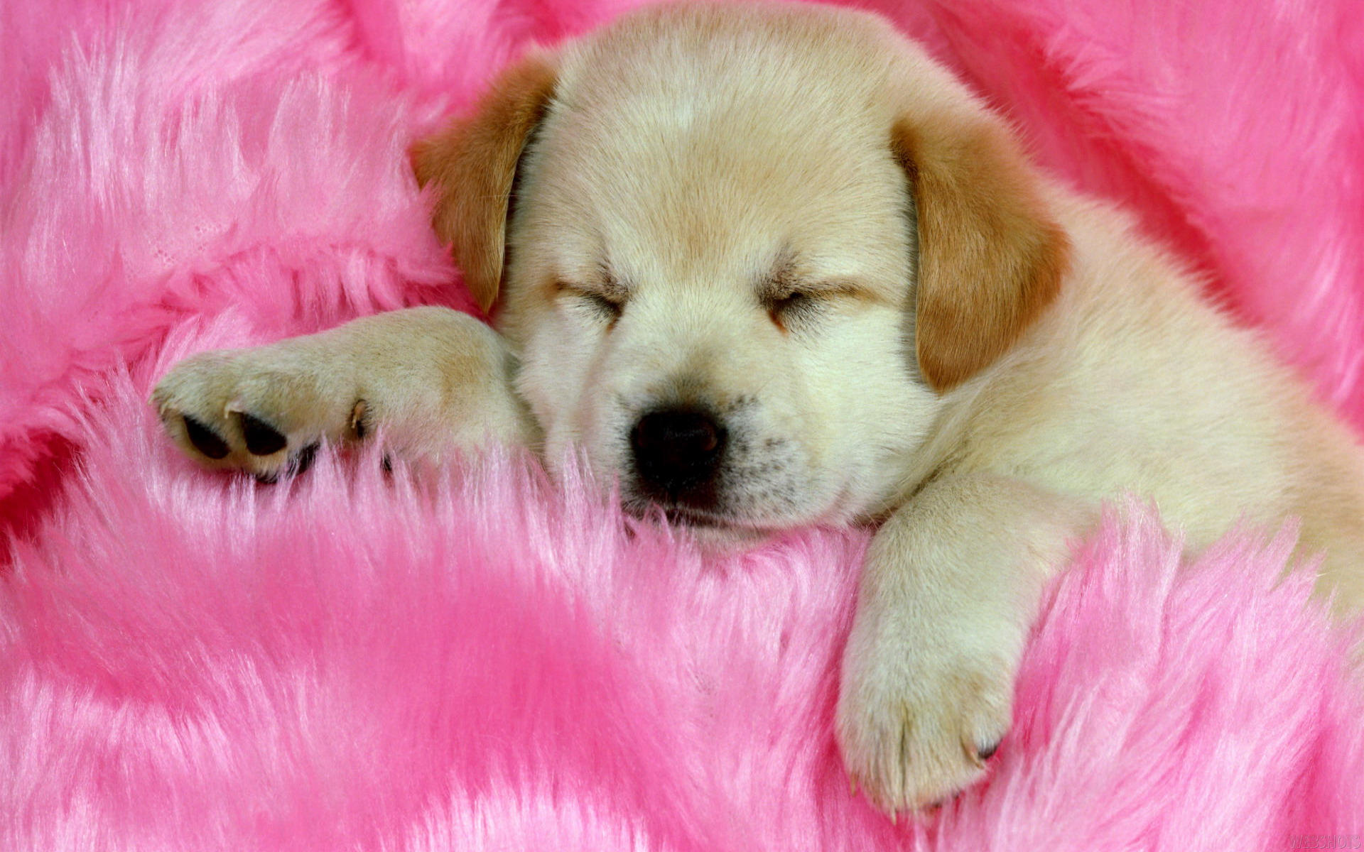 Cute Dog wallpaper   142694 1920x1200