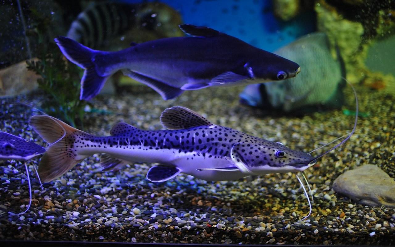 image wallpaper 1280 800 pictures wallpaper A sea Aquarium free 1280x800