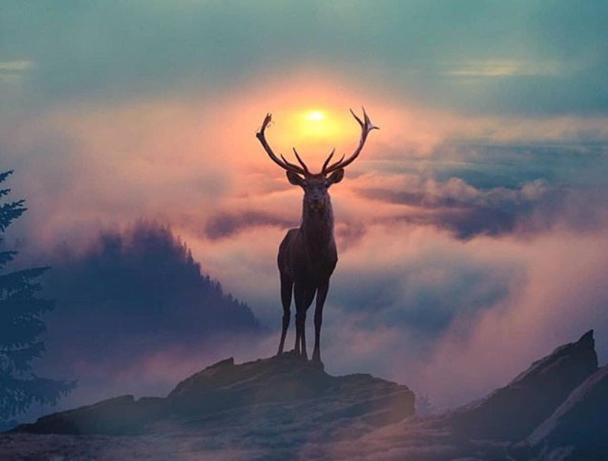 58 Best Beautiful deer wallpaper ideas deer wallpaper deer 1200x910