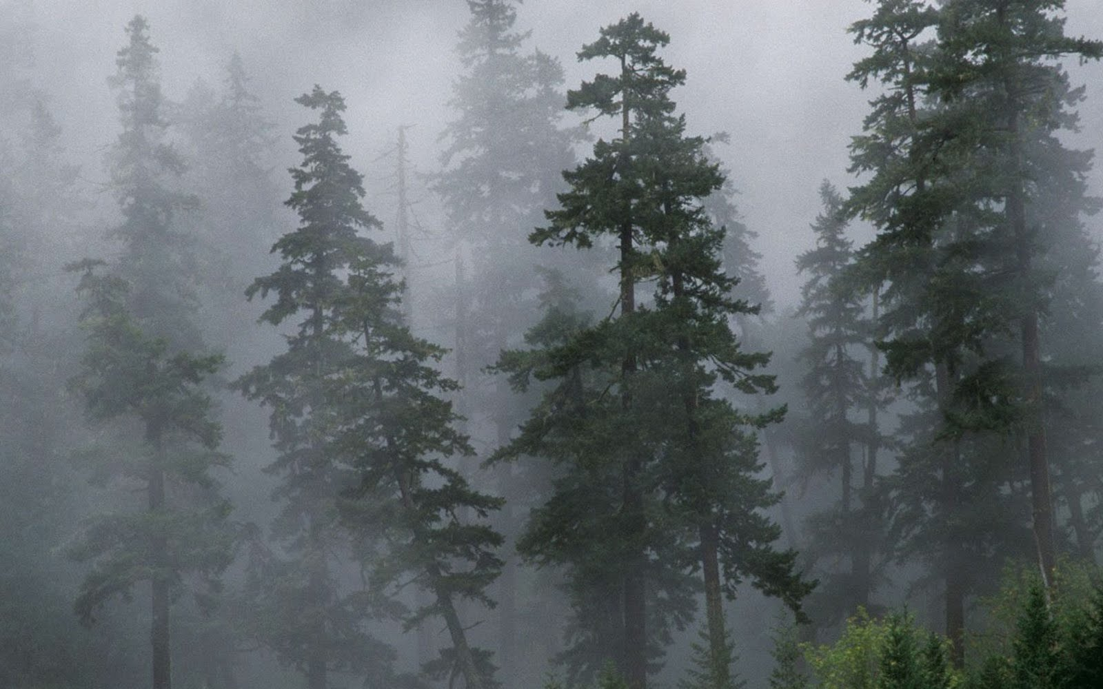 Fog at Forest wallpaper 1600x1000