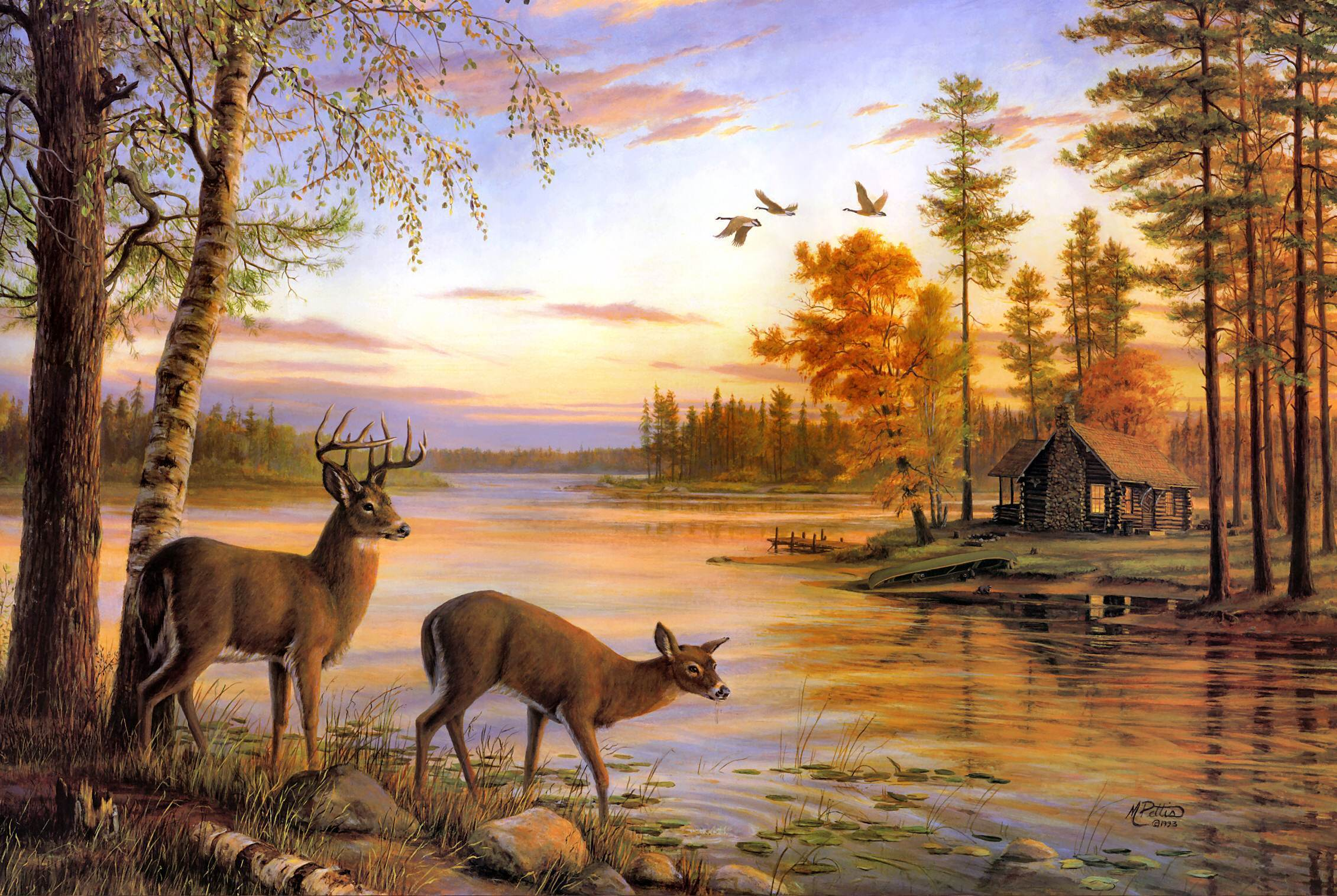 deer pictures deer wallpapers deer wallpapers deer wallpapers deer 2261x1516