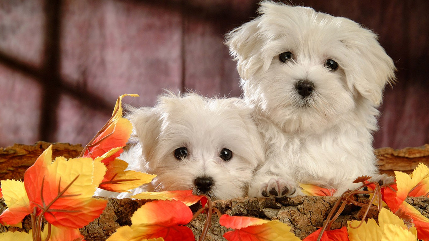 cute dogs wallpapers - wallpapersafari