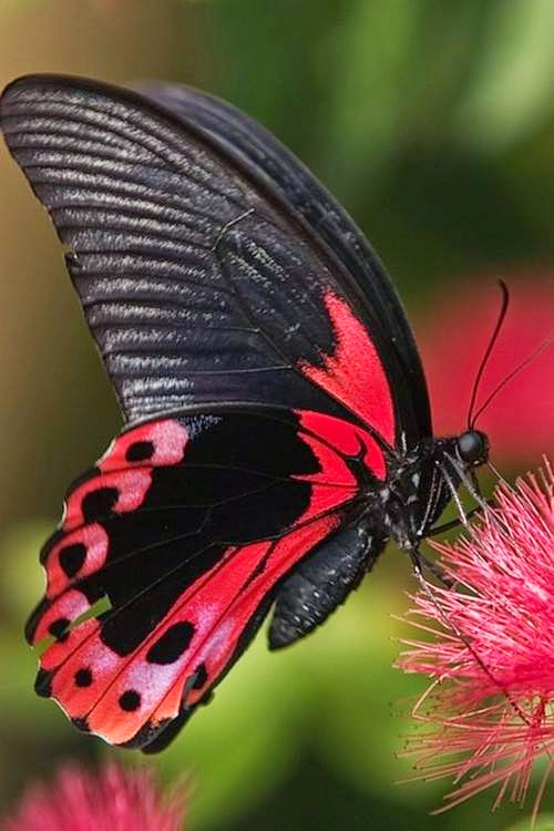 Cute Butterflies pictures download Beautiful Butterflies 500x750