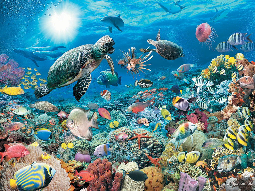 Underwater desktop wallpaper wallpapersafari - Underwater desktop background ...
