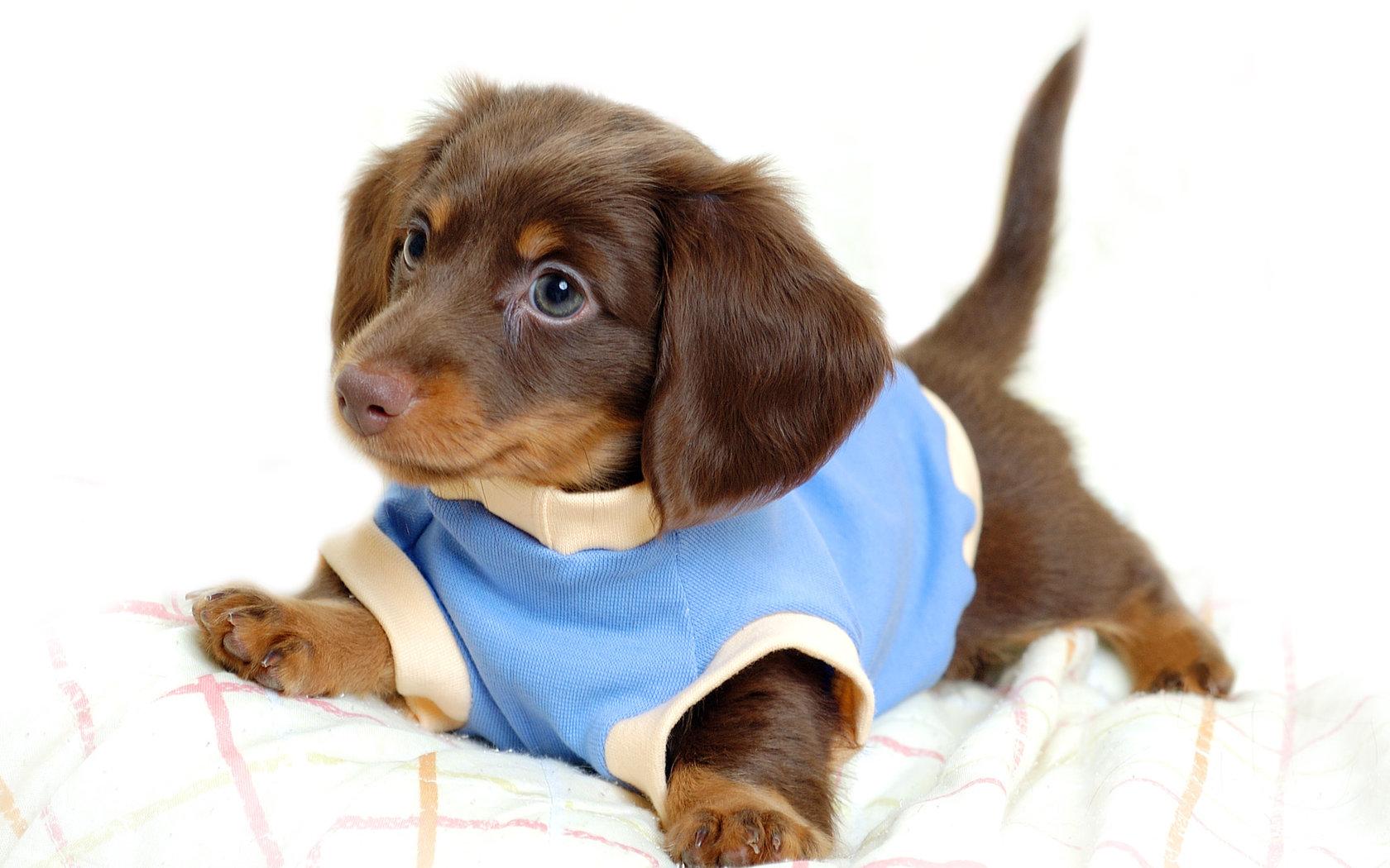 Funny puppy Desktop wallpapers 1680x1050 1680x1050