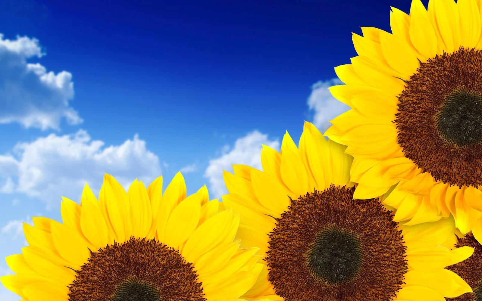 Sunflower Desktop Wallpaper - WallpaperSafari