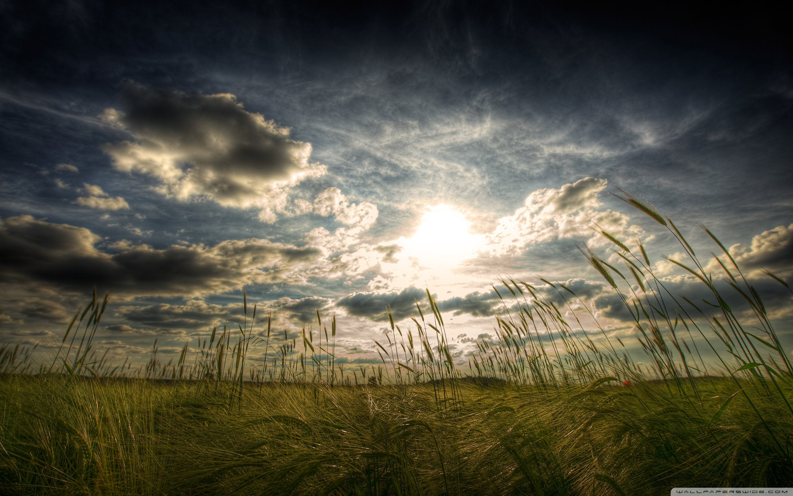 Peaceful Summer Day 4K HD Desktop Wallpaper for Dual Monitor 2560x1600