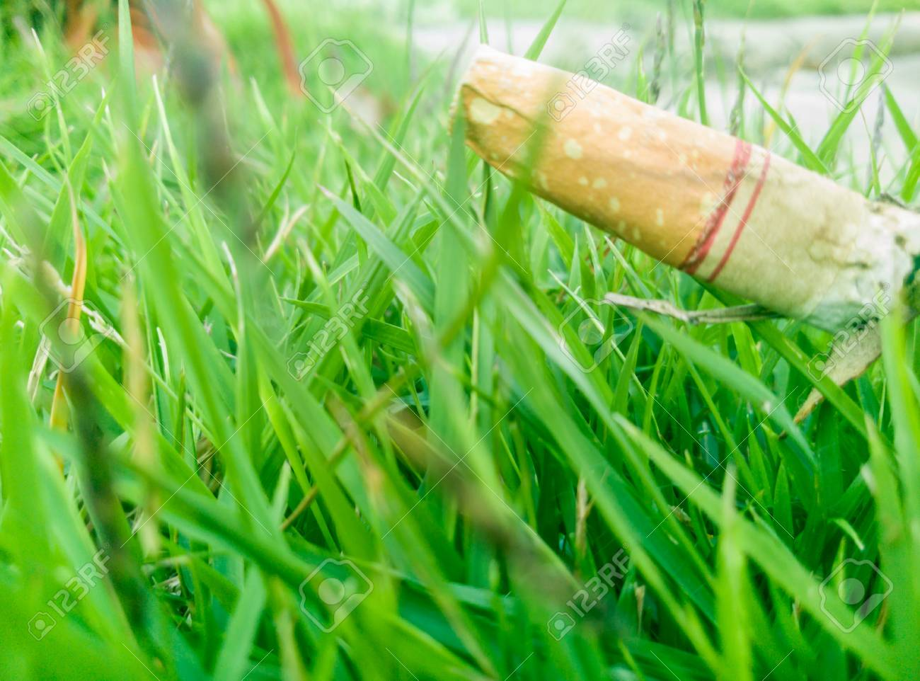 Cigarette Stub With Green Plant Background Stock Photo Picture 1300x962