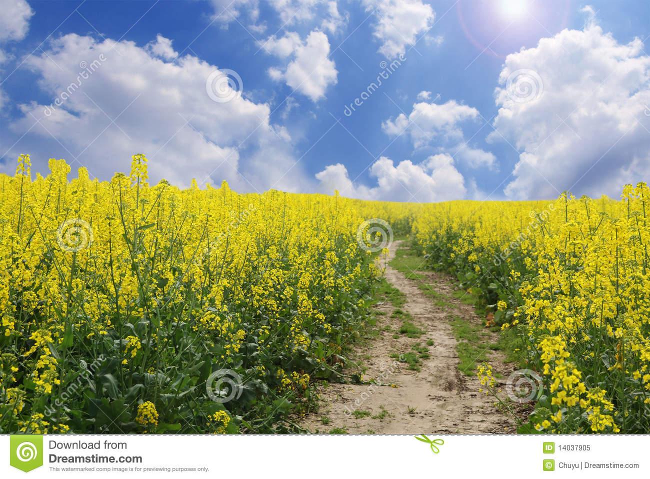 Top Spring Meadow Scenery Wallpaper Wallpapers 1300x957