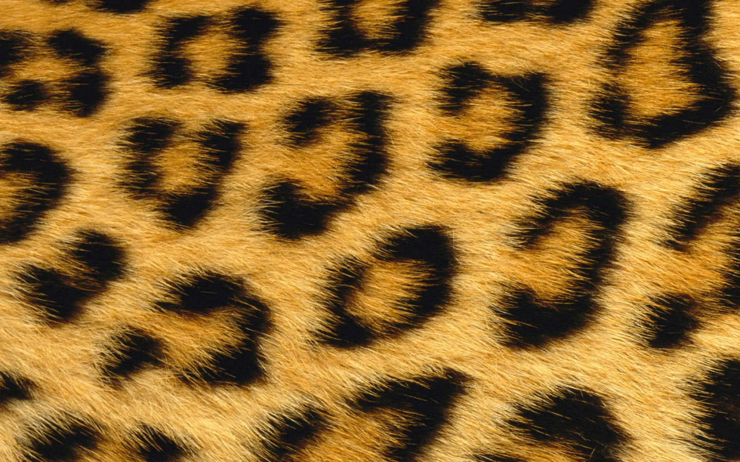 1440x900 Leopard Skin desktop PC and Mac wallpaper 1440x900
