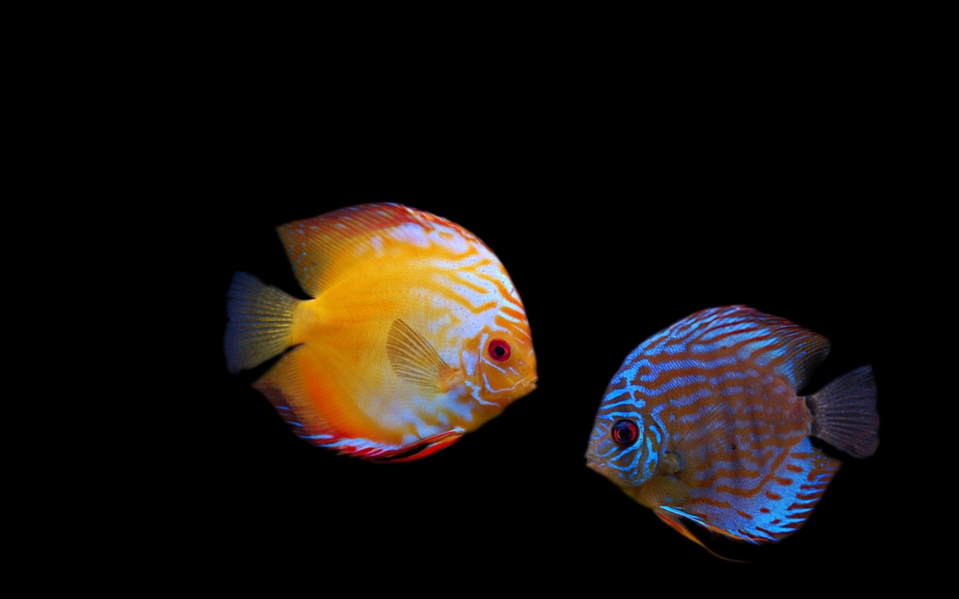 poissons avec une belle couleur 1920x1200 wallpapers Fond dcran 3D 1920x1200