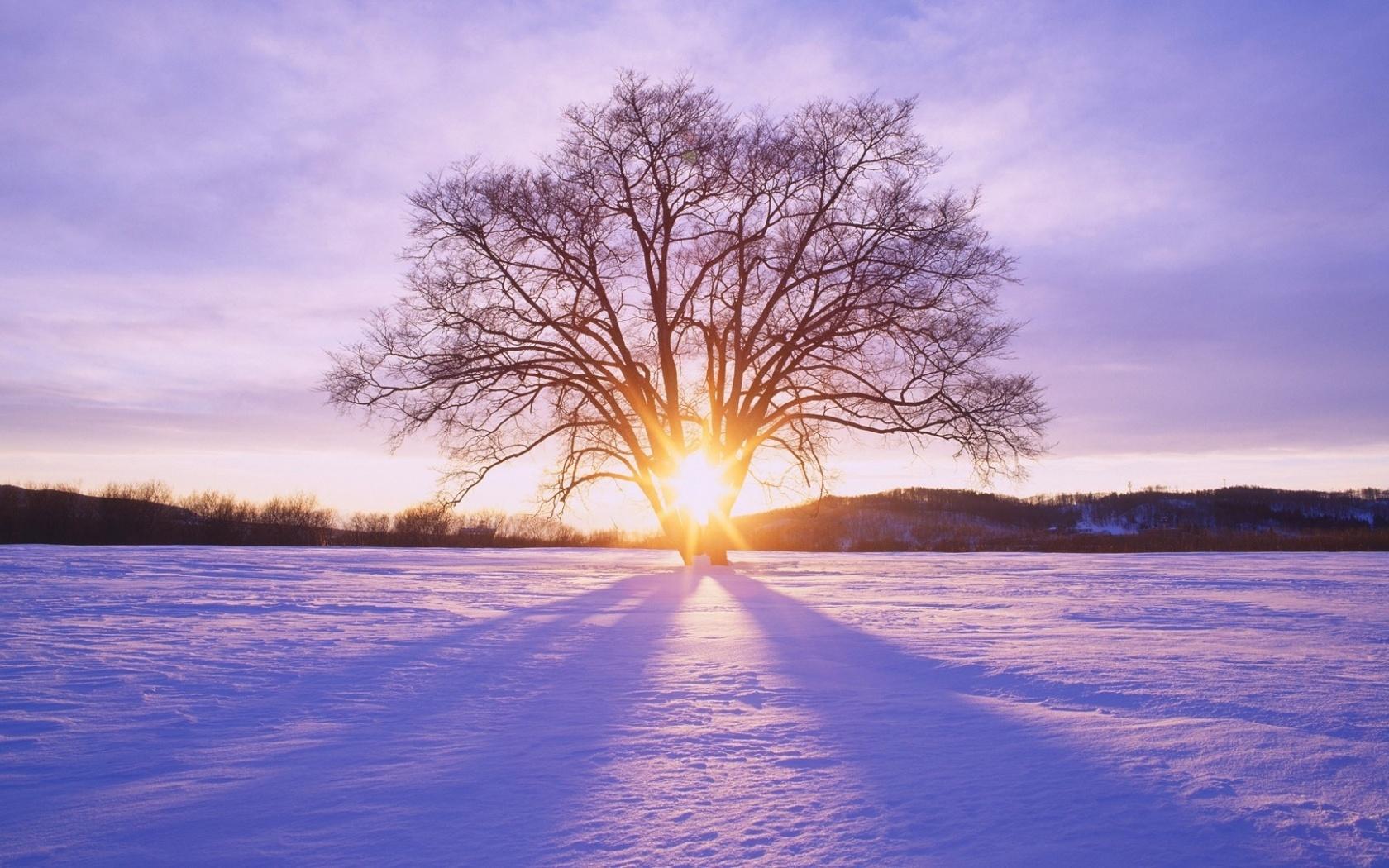 1680x1050 Shiny Sun Tree amp Snow Scenery desktop PC and Mac 1680x1050