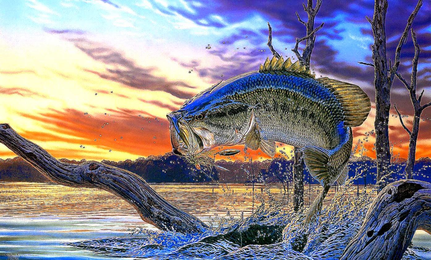 Largemouth Bass Fishing Wallpaper Background Screensaver Best 1394x840