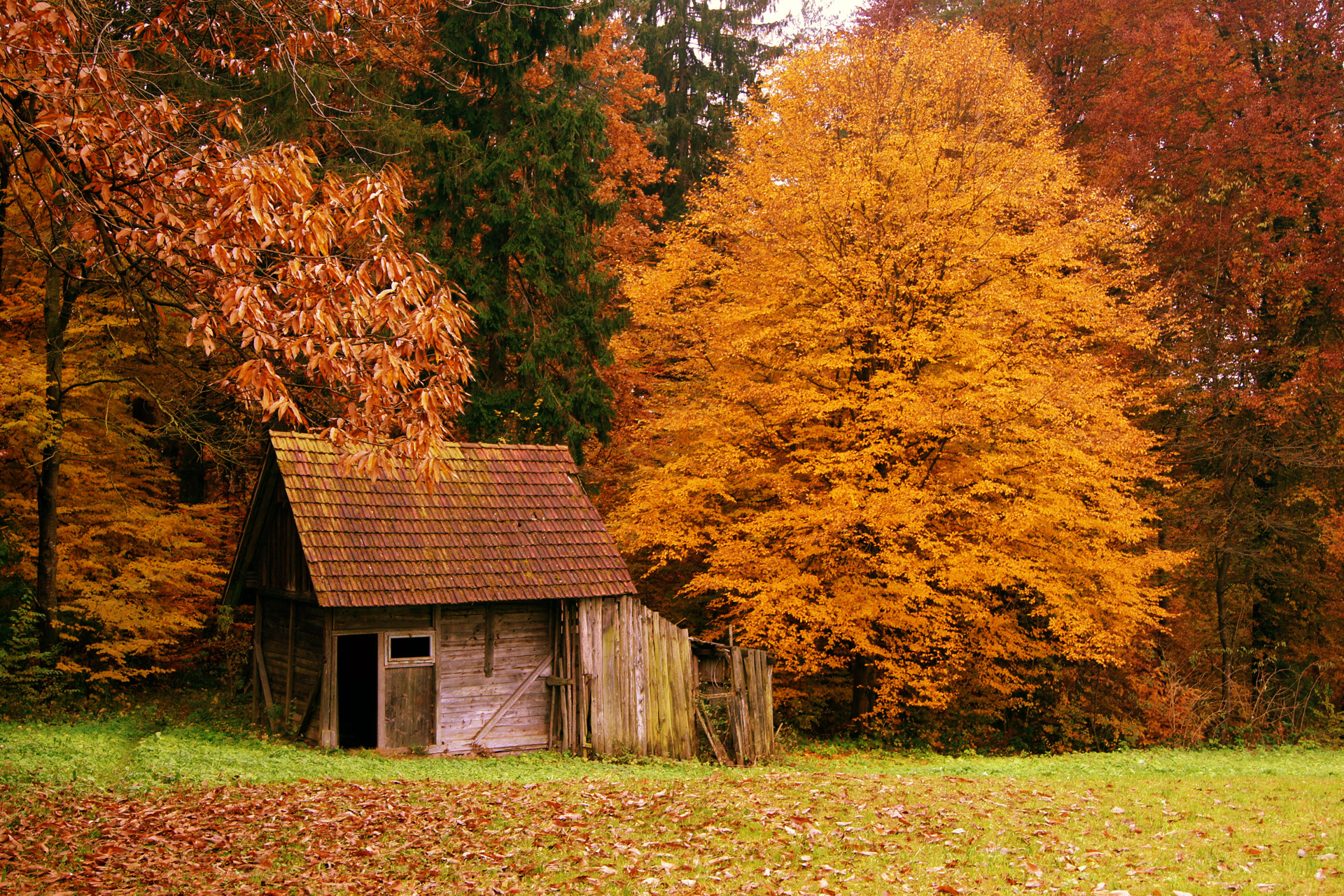 autumn 1 buildings 1 fall 1 forest 1 landscapes 1 nature 1 scenery 1 1920x1280